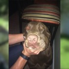 Dog Survives Venomous Snake Bite to the Face