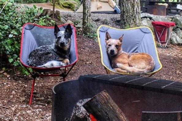 Camping With the Dog Is Fun