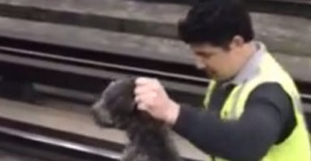 Train Conductor Stops Train and Rescues Dog