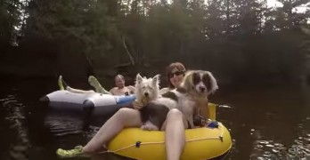 Dogs Go Tubing