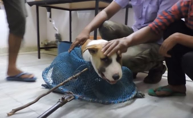 """Rescuers Save Dog With Wire """"Collar"""" Around Neck"""