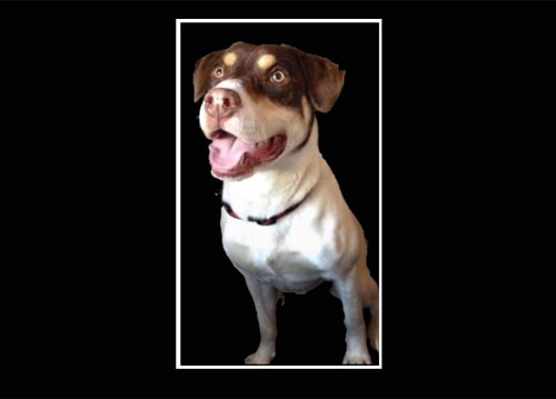 Shelter Dog Found Shot in Wooded Area
