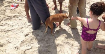 Cuban Pet Owner and Dog Risk Lives At Sea for American Dream