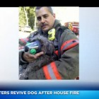 """Firefighters to the """"Dog"""" Rescue!"""