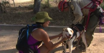 Angel the Lucky Dog Survives Falling 600 ft.