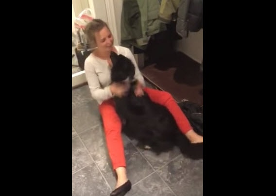 Dog Welcomes Owner Home After Three Months Apart