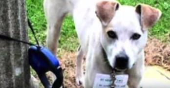 Woman Walks 3 Miles to Save Dog