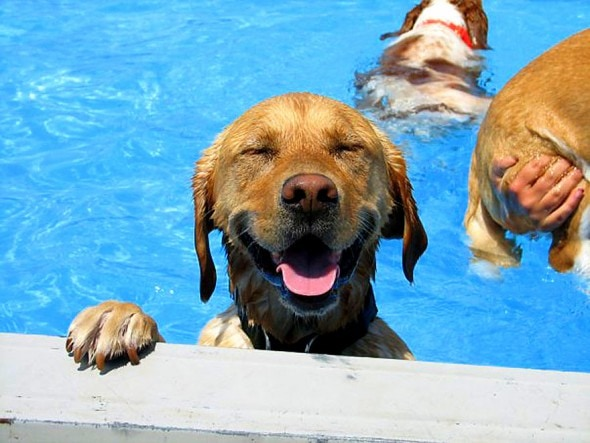8.28.15 - Dogs Who Have Really Enjoyed Summer0