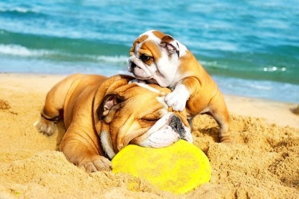8.28.15 - Dogs Who Have Really Enjoyed Summer1