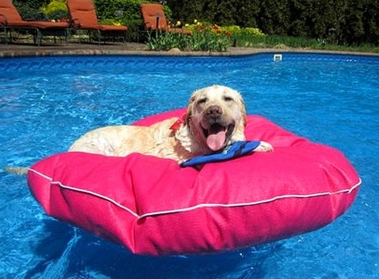 8.28.15 - Dogs Who Have Really Enjoyed Summer11