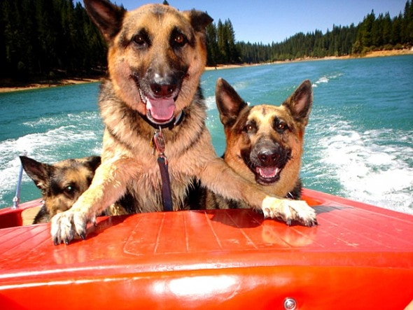 8.28.15 - Dogs Who Have Really Enjoyed Summer14
