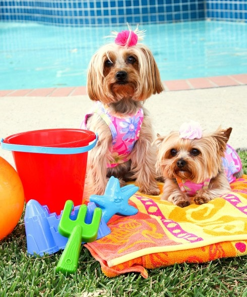8.28.15 - Dogs Who Have Really Enjoyed Summer16