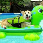 Dogs Who Have Really Enjoyed Summer
