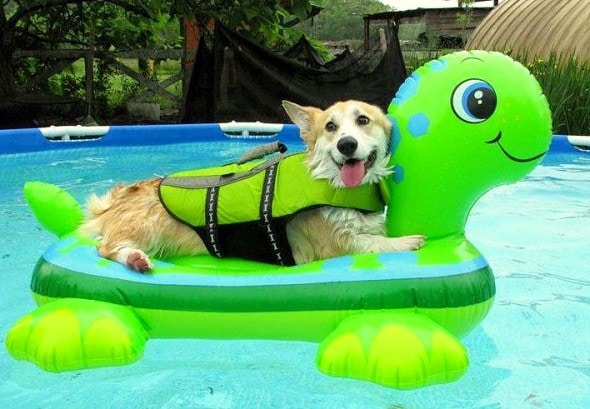 8.28.15 - Dogs Who Have Really Enjoyed Summer18