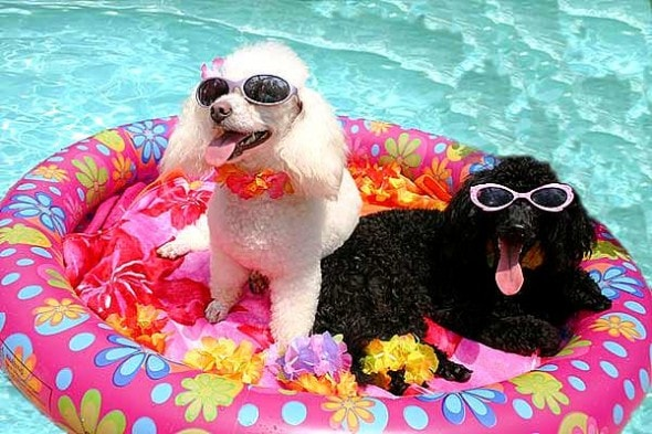8.28.15 - Dogs Who Have Really Enjoyed Summer2
