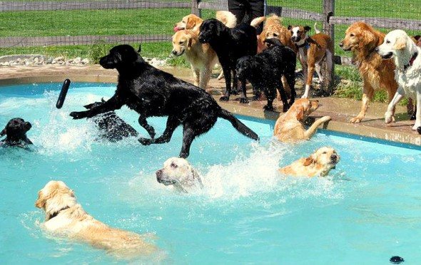 8.28.15 - Dogs Who Have Really Enjoyed Summer23