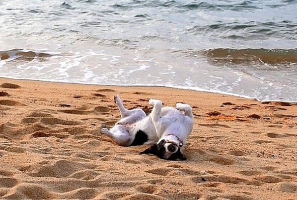 8.28.15 - Dogs Who Have Really Enjoyed Summer24