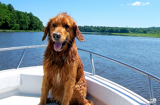 8.28.15 - Dogs Who Have Really Enjoyed Summer3