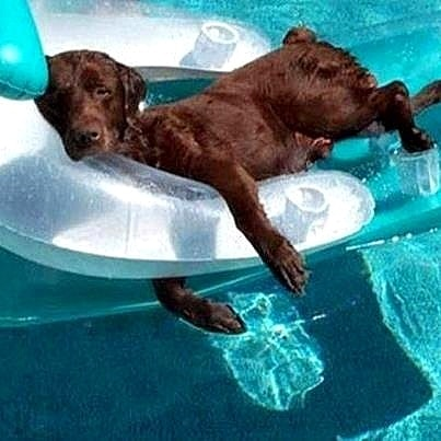 8.28.15 - Dogs Who Have Really Enjoyed Summer4