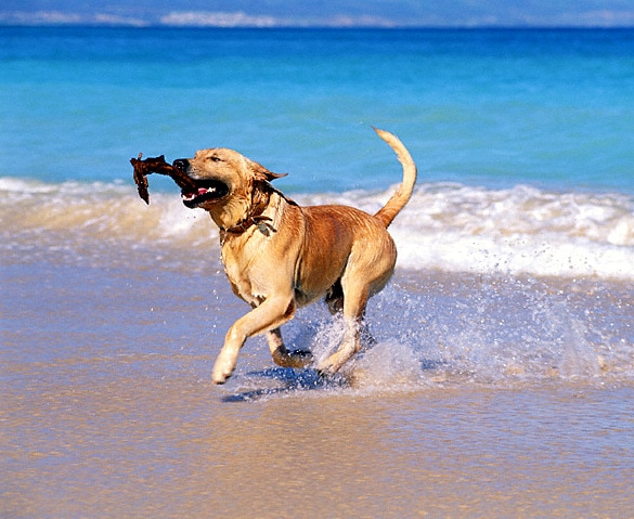 8.28.15 - Dogs Who Have Really Enjoyed Summer7