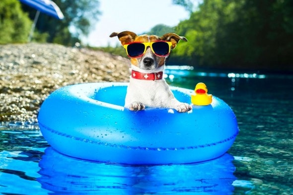8.28.15 - Dogs Who Have Really Enjoyed Summer8