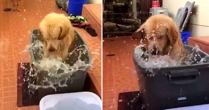 This Dog Really DIGS Bath Time!
