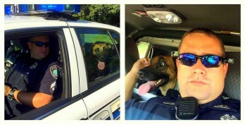 Police Officer Assists Dog After Car Accident