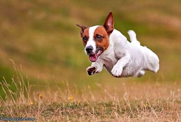 9.10.15 - Dogs Who Can Fly1
