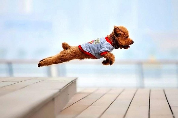 9.10.15 - Dogs Who Can Fly10