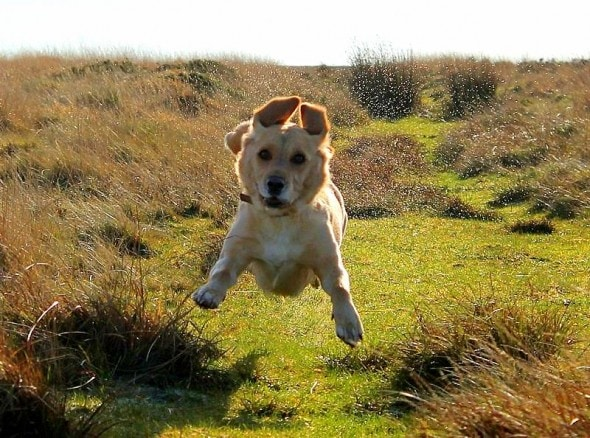 9.10.15 - Dogs Who Can Fly11