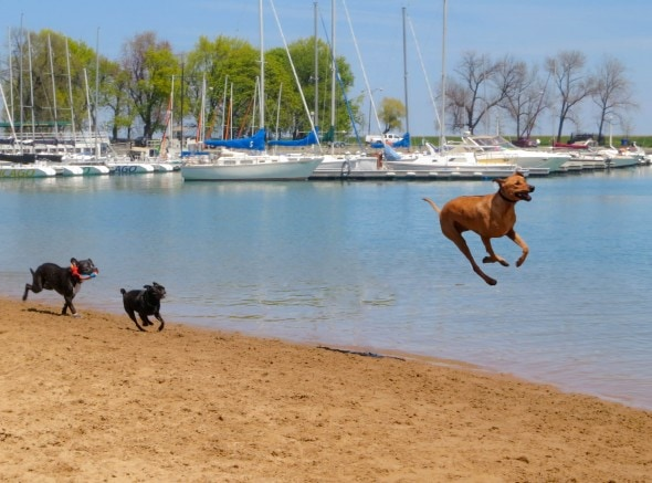 9.10.15 - Dogs Who Can Fly13