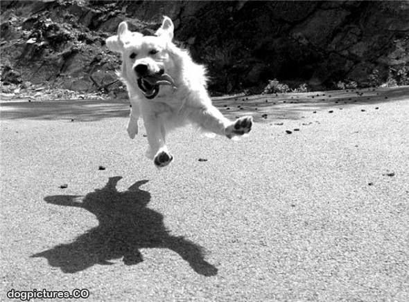 9.10.15 - Dogs Who Can Fly15