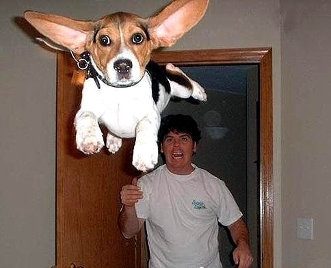 9.10.15 - Dogs Who Can Fly16