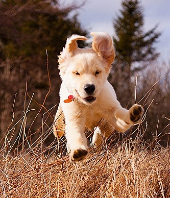 9.10.15 - Dogs Who Can Fly3