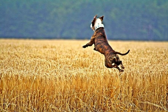 9.10.15 - Dogs Who Can Fly4