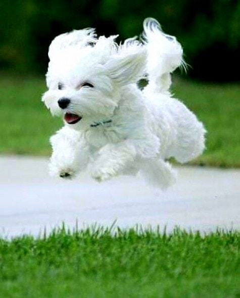9.10.15 - Dogs Who Can Fly5