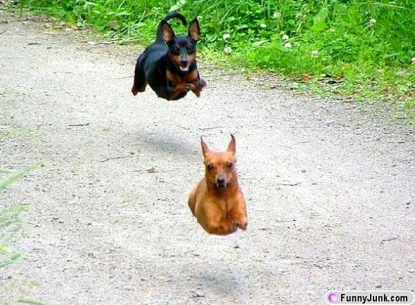 9.10.15 - Dogs Who Can Fly6