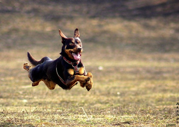 9.10.15 - Dogs Who Can Fly7