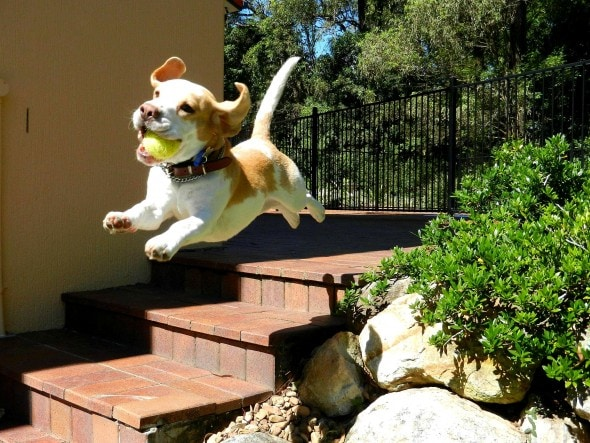 9.10.15 - Dogs Who Can Fly8