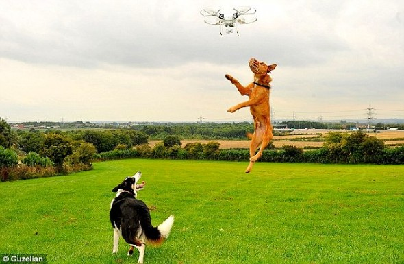 9.10.15 - Drones for Hyperactive Dogs1