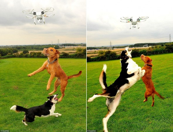 9.10.15 - Drones for Hyperactive Dogs3