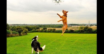 Hyperactive Dog?  Get a Drone!
