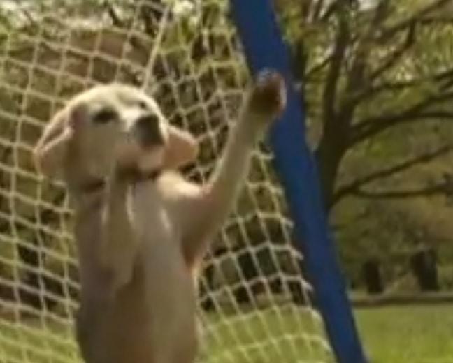 World Record Breaking Dog