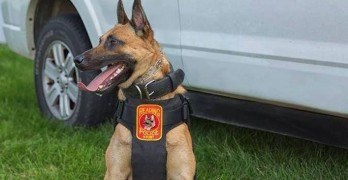 K-9 Officer's Life Saved by Good Planning