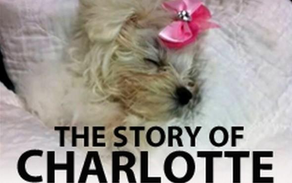 9.15.15 - CharlotteFEAT