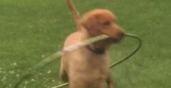 Dog Makes an Attempt at the Hula Hoop