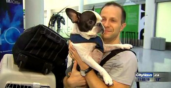 International Flight Diverted by Pilot to Save Dog