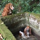 Dog Guards for a Week Until Trapped Friend is Saved