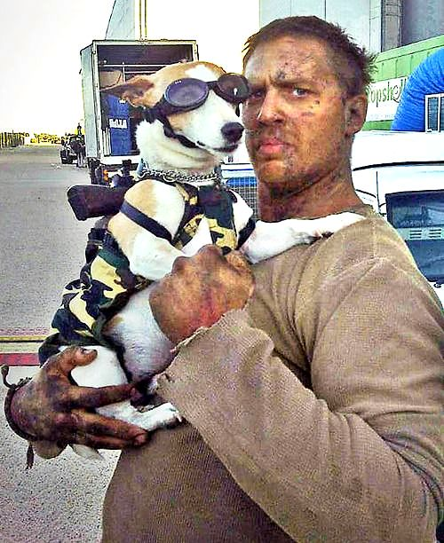 Tom Hardy S Dogs Are His Inspiration