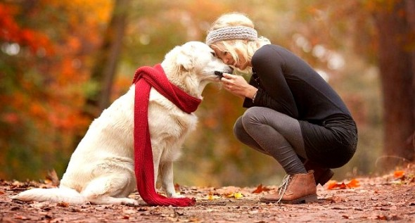 9.19.15 - 25 Ways Your Dog Loves You0